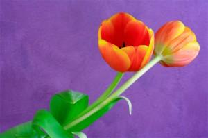 vibrant-colour3