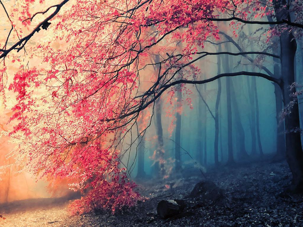 Fog-deep-forest-1024x768