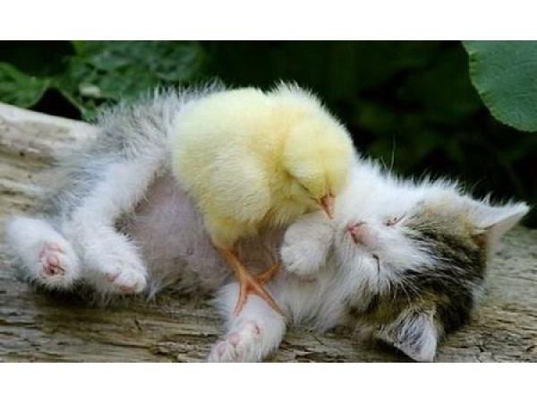 hayvan-dostluklari,17,box